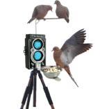 bird-feeder-photography