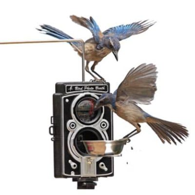 bird-photo-booth-birdfeeder