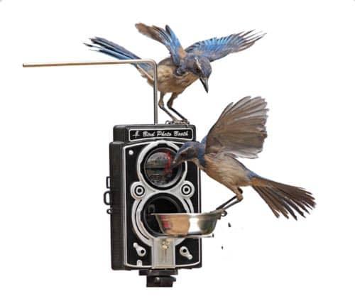 bird-photo-booth-birdfeeder