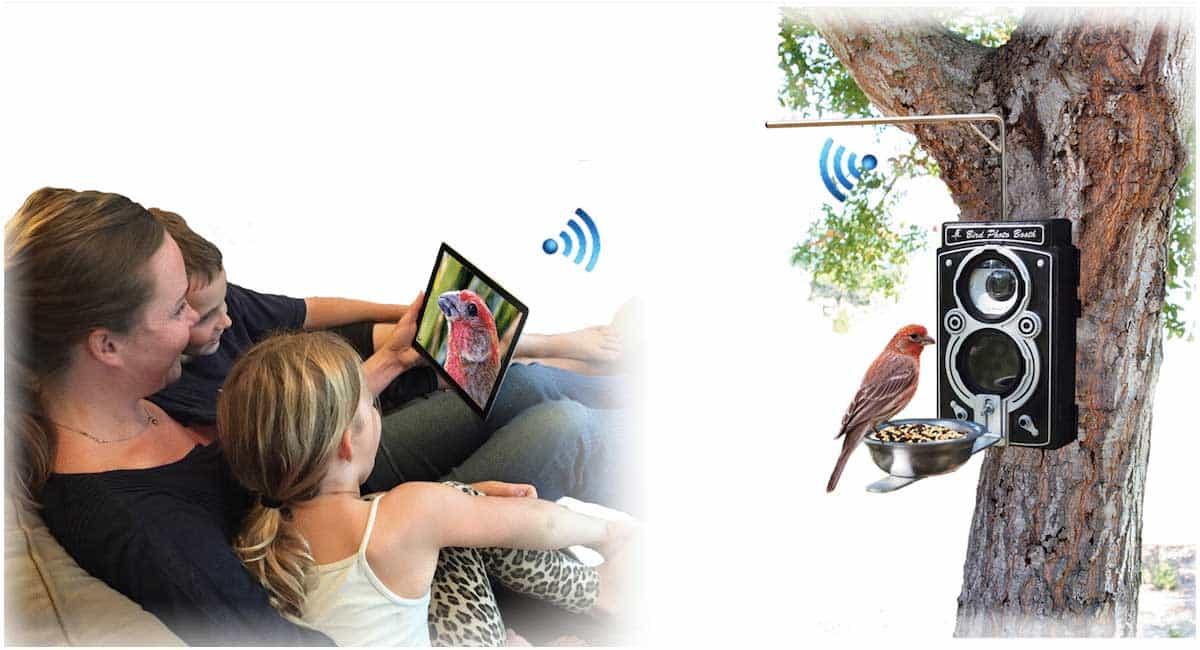 bird watching, bird feeding, and bird photography all in one.