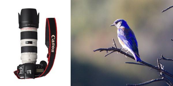 Bird photography lens canon AVS Video Converter CrackSerialKeygen