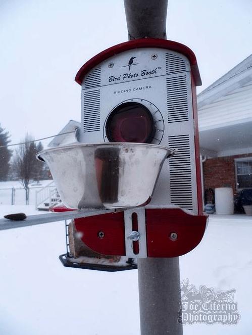 weatherproof bird feeder bird cam for your backyard