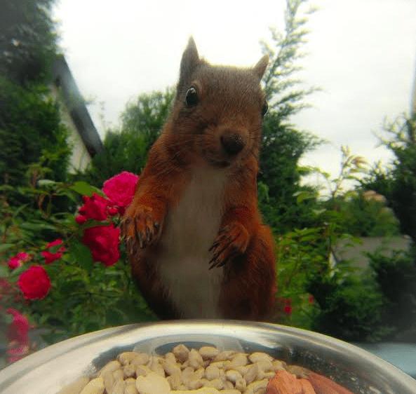 GoPro Squirrel photo