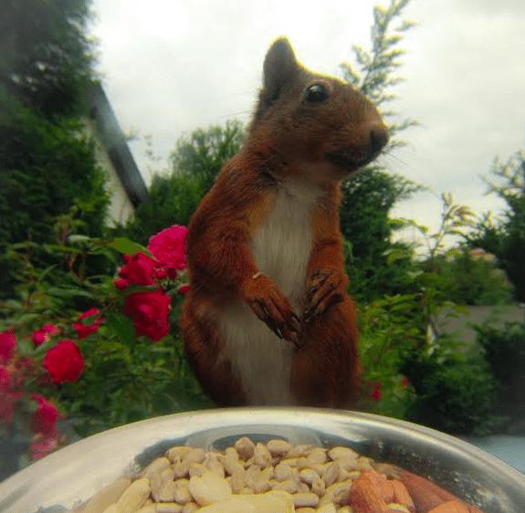GoPro Squirrel photos