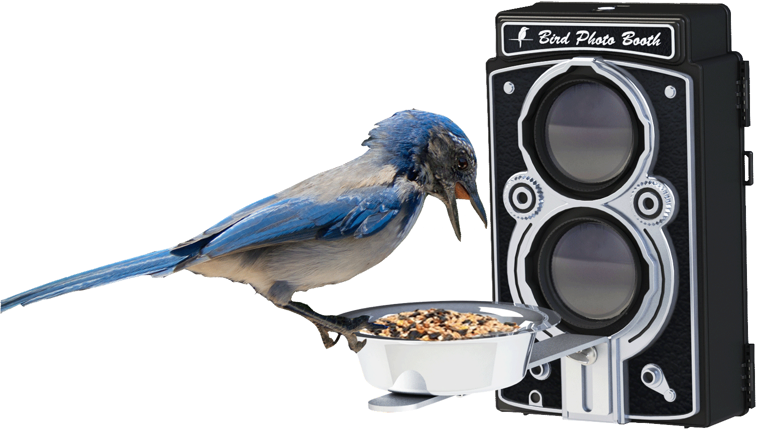 bird-feeding-at-bird-photo-booth