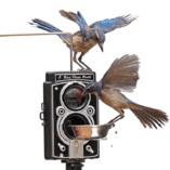 birdcam-birdphotobooth-feeder