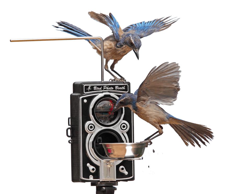 activated Wi-Fi bird cam combo | bird feeders | best wild bird feeders | bird cam