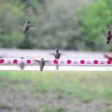 hummerbar-feeder-hummingbirds
